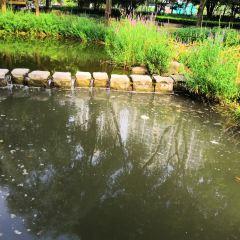 蓮花景區用戶圖片