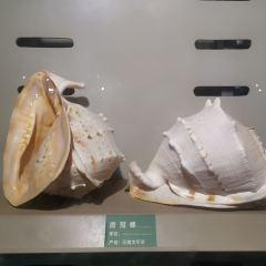 Aquarium User Photo