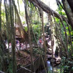 Ubud Monkey Forest User Photo