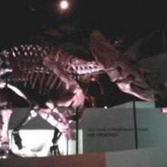 休士頓博物館用戶圖片