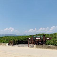 竹塔紅樹林自然保護區用戶圖片