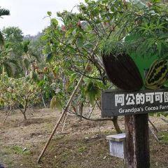 阿信巧克力農場用戶圖片