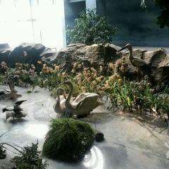 길림성자연박물관 여행 사진