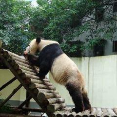 Hengyang Zoo User Photo