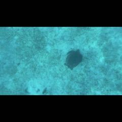 Balicasag Reef User Photo