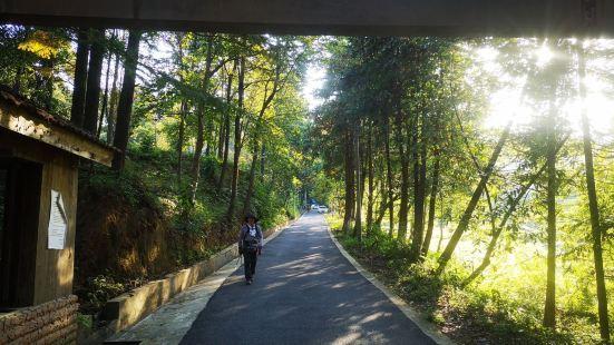 Wuchaoshan National Forest Park