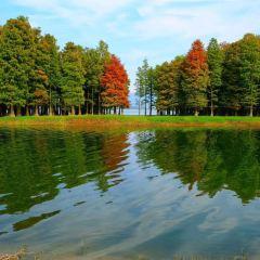 Halla Arboretum User Photo