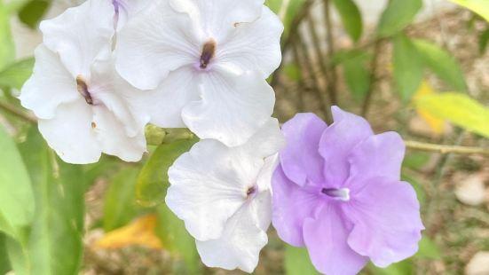 Hainan Tropical Botanical Garden
