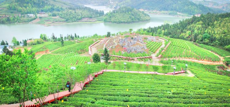 Erlong Tea Farm