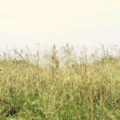 漁舟灣濕地公園用戶圖片