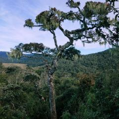 Horton Plains National Park User Photo