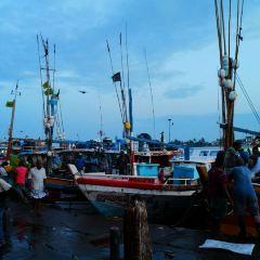 Negombo Central Fish Market User Photo