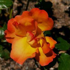 Christchurch Botanic Gardens User Photo