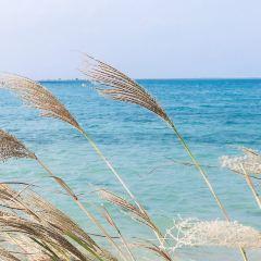 세나가 섬 여행 사진