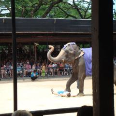 Samphran Elephant Ground & Zoo User Photo