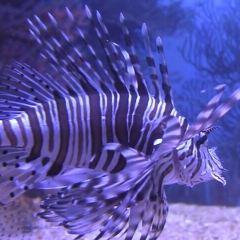 兩大洋水族館用戶圖片