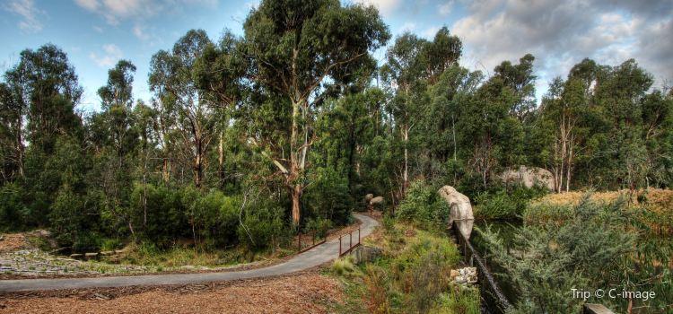 Tidbinbilla Nature Reserve1