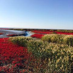 盤錦紅海灘風景區用戶圖片