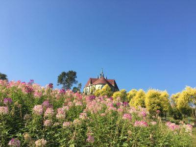 Lupine Fairy Garden