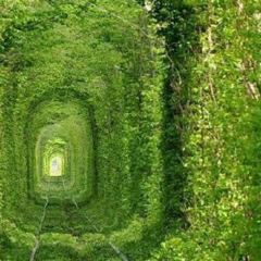 Tunnel of Love User Photo
