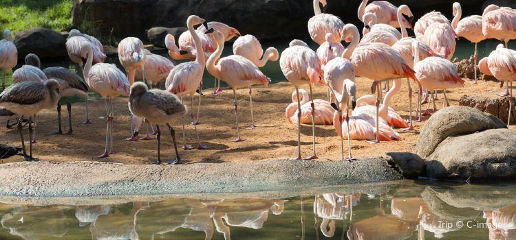 휴스턴 동물원1
