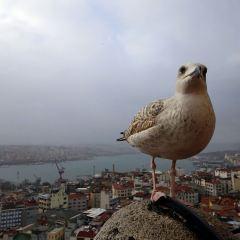 Galata Tower User Photo