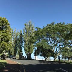 一樹山用戶圖片