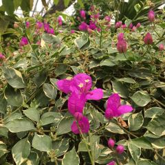 Ulugu Tropical Botanical Garden User Photo
