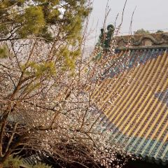 Yong'an Monastery User Photo