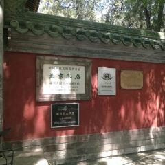 공자묘 여행 사진