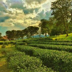 Singha Park User Photo