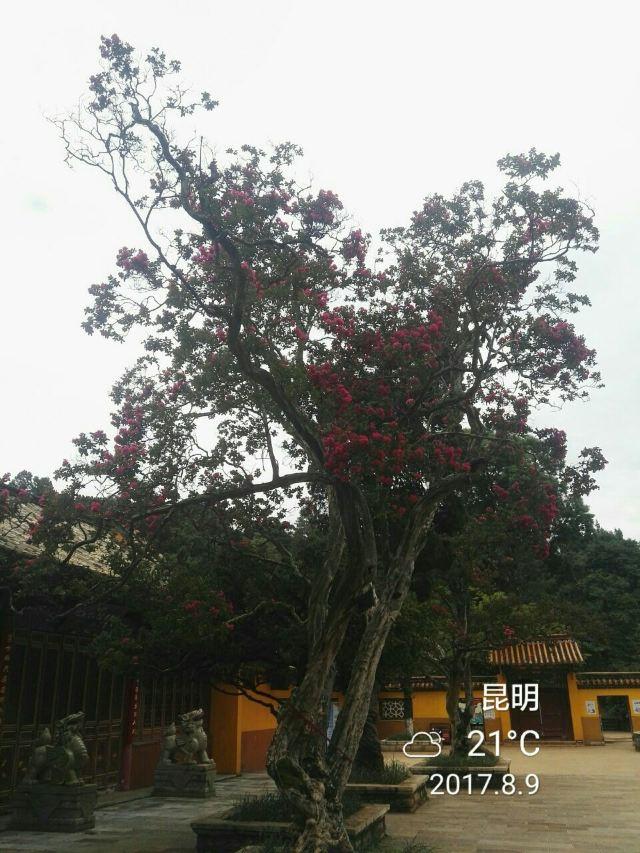 헤이룽탄 공원