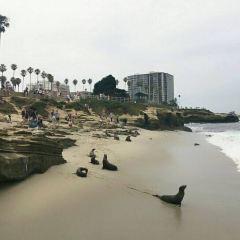 拉霍亞海灘用戶圖片