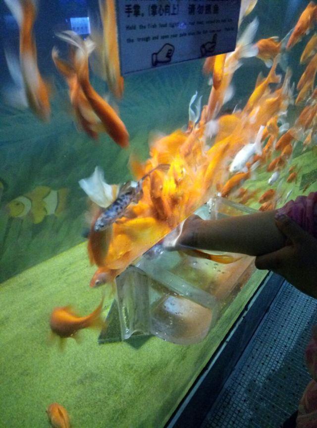 다롄 라오후탄 해양생물관