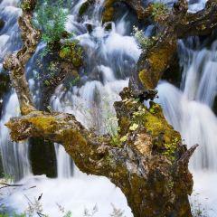樹正瀑布用戶圖片