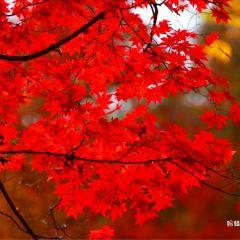 蛟河紅葉谷用戶圖片