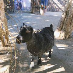 San Diego Zoo Safari Park User Photo