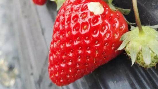 鮮多多草莓園