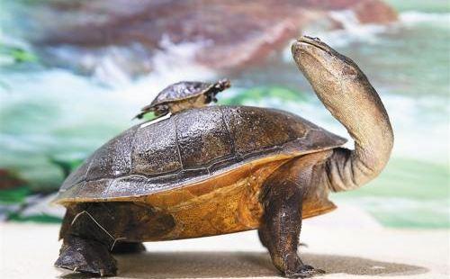 龜鱉自然博物館