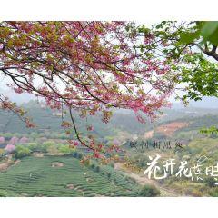 Yongfu Cherry Blossom Garden User Photo