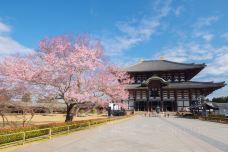 东大寺-奈良-doris圈圈