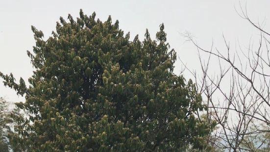 宜興竹海淩雲閣