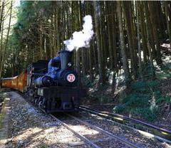 아리산 국가 삼림 공원 여행 사진