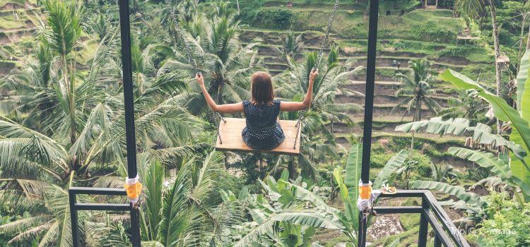 Bali Swing1