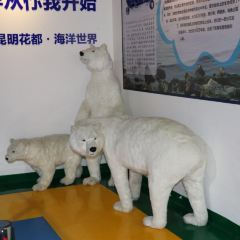 쿤밍 화두 하이양스제 여행 사진
