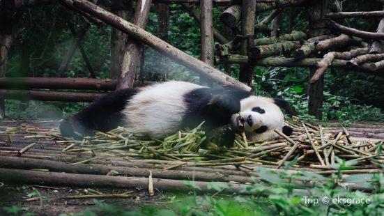 Chengdu Giant Panda Ecological Park Tourism Museum