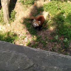 Zhongnan Baicao Garden User Photo