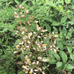 威美亞植物園用戶圖片