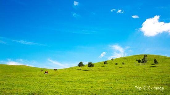 張北壩上草原