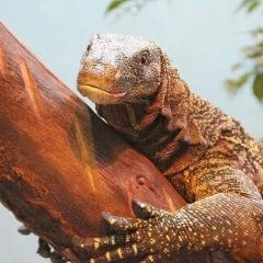 奧克拉荷馬城市動物園用戶圖片